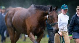 How to help your horse recover after exercise