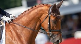 Perfecting your horse's plaits