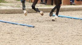 Show jumping exercises for event horses