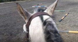 Improve your horse's balance