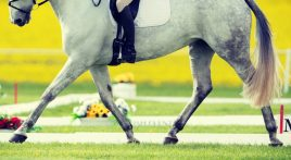 Look after your horse's gut