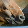 What you need to know about horse hydration