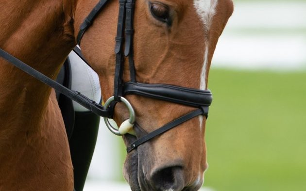 Finding the perfect bit for your horse