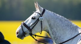 What colours can horses see?