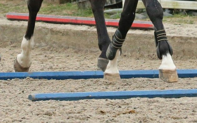 Exercise your horse without getting in the saddle