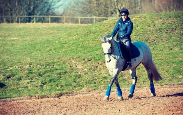 Warming up your horse for winter