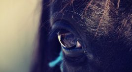 How do horses see?